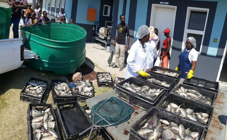 Namibia to source fishing experts from China